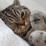 猫のための住宅リフォーム